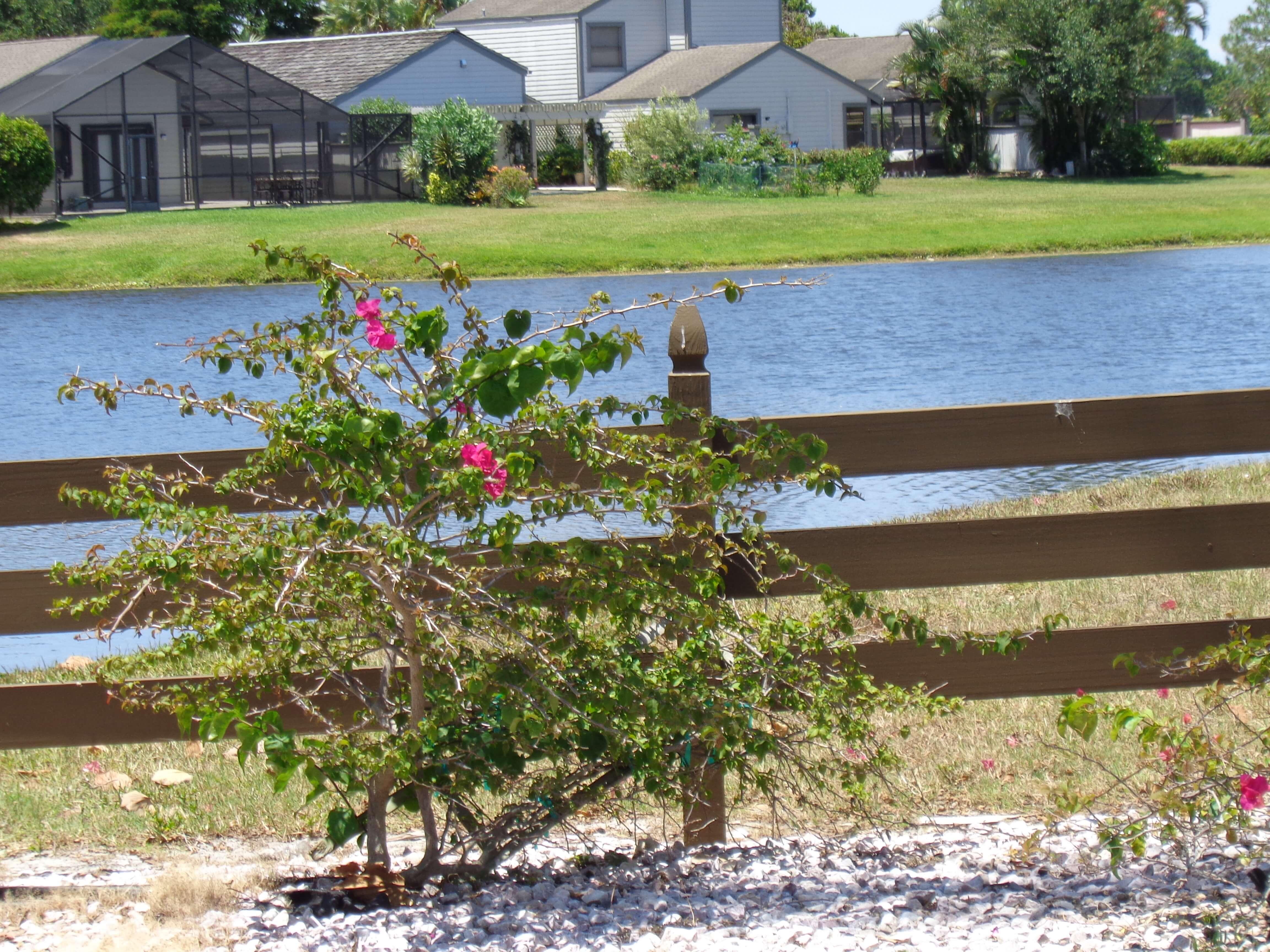 Bedford Mews Wellington Florida Real Estate