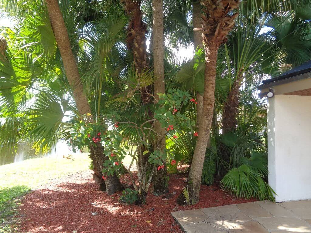 The Shores Condos For Sale in Wellington FL - Beautiful Landscaping